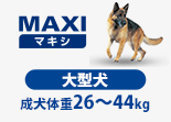 Maxiの愛犬