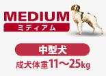 Mediumの愛犬
